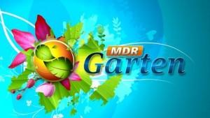 Fernsehbeitrag: MDR Garten im Ahornpark Ilfeld