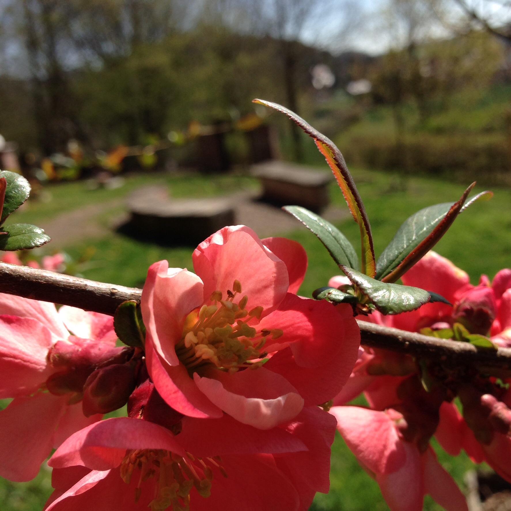 Frühling im Ahornpark