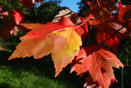 Bitte Blätter sammeln