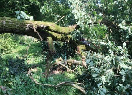 Umgestürzte Eiche versperrt Hauptweg im Ahornpark Ilfeld