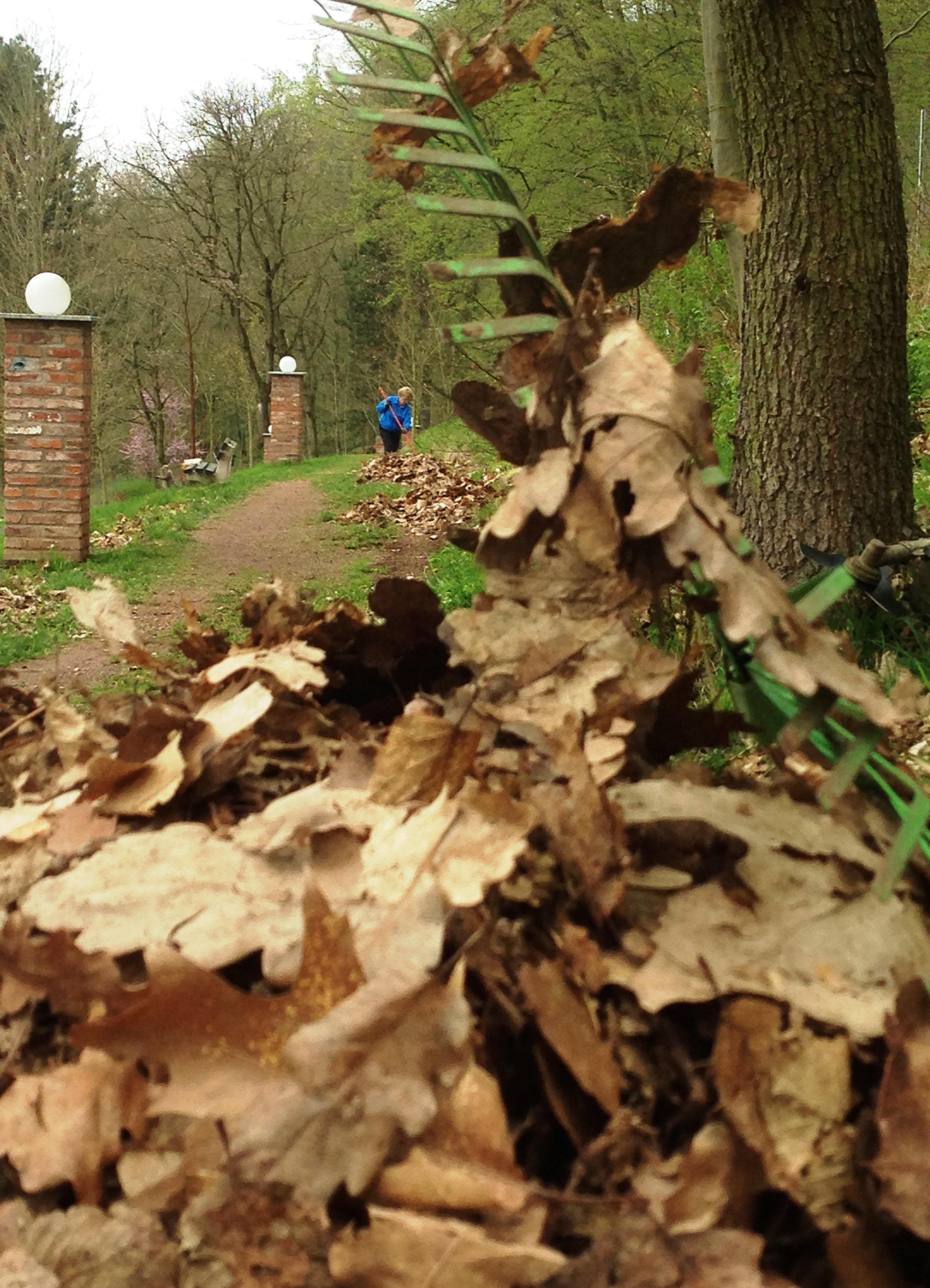 Den Wald haben wir nicht gefegt, aber den Park …..