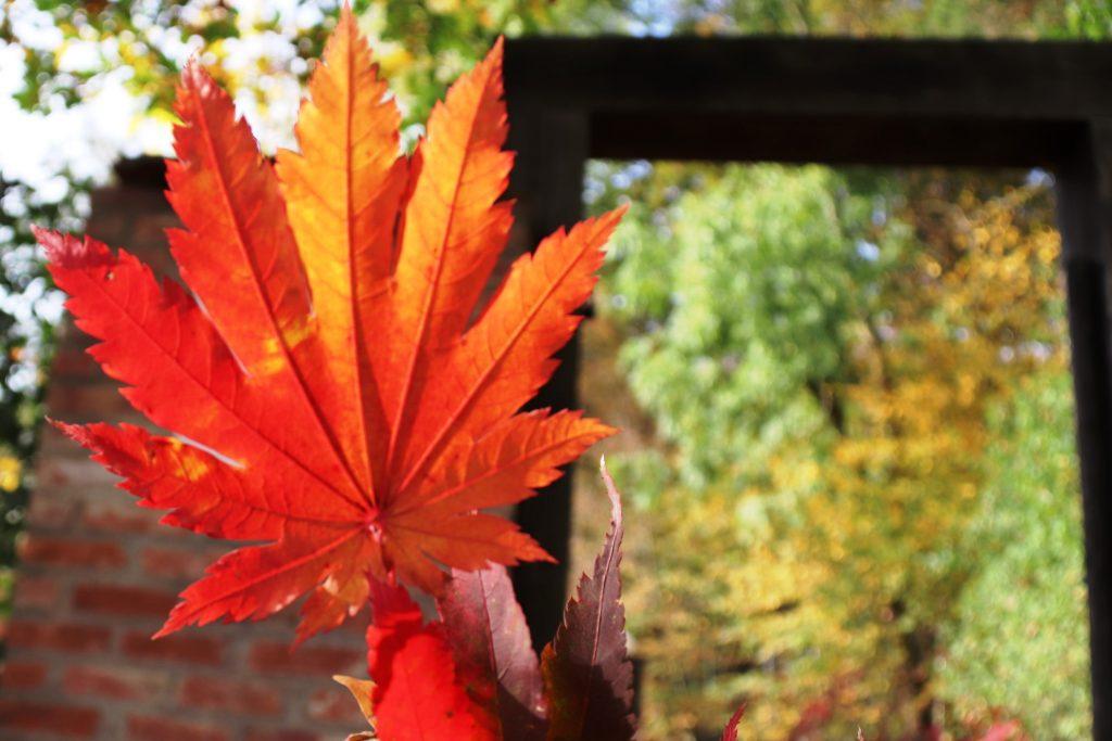 """""""Wenn es dem Sommer zu bunt wird, ist Herbst. """""""